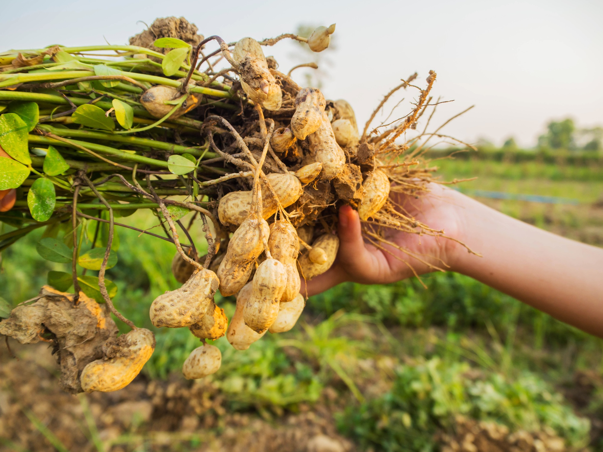 Duurzaam broodbeleg: pindakaas